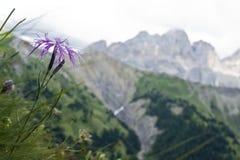 Dolomiti в Италии Стоковые Изображения