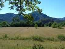 Dolomiti del Brenta en été Photo libre de droits