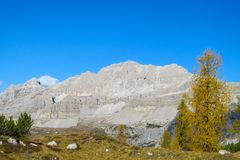Autumn mountains yellow trees landscape in the Alps. Dolomiti di Brenta, Italy, the Dolomites. Beautiful rocky peak tower mountains Alps in autumn royalty free stock images