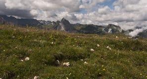 Dolomitian ängar Royaltyfri Foto