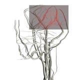 Dolor de cabeza Libre Illustration