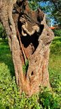 Dolor de la madre naturaleza en un agujero del árbol Foto de archivo libre de regalías
