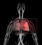 Dolor del corazón y de pecho Foto de archivo libre de regalías