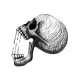 Dolor del cráneo Dé la línea cráneo humano anatómico correcto del drenaje del arte ilustración del vector