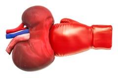 Dolor en riñones, concepto crónico de la enfermedad de riñón Riñón con la caja libre illustration