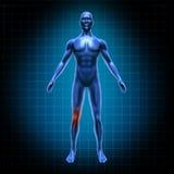 Dolor humano de la rodilla ilustración del vector