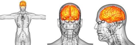 dolore del cervello umano Immagine Stock Libera da Diritti