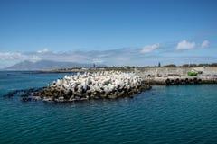 Dolosse à l'entrée au port d'île de Robben Photo libre de droits