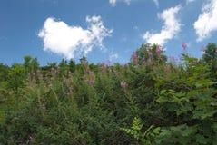 Dolovi di Lalevica sulla montagna di Bjelasica, Montenegro Fotografia Stock Libera da Diritti