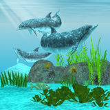 Dolphin 01. Three playful dolphins swim around a reef area looking for fish to eat Royalty Free Stock Images