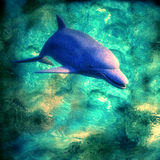 Dolphin. Underwater scene Royalty Free Stock Photos