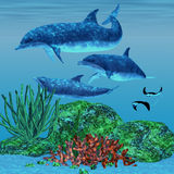 Dolphin 02. Three dolphins glide around a reef area looking for fish to eat while two Manta Rays swim nearby Royalty Free Stock Image