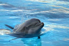 Dolphin 03 Stock Images