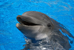 Dolphin. Portrait of dolphin in the water Stock Photo