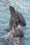 Dolphin. Two dolphins with their heads out of the water Royalty Free Stock Photo