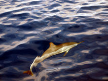 Dolphin. Swimming from above crystal clear water Royalty Free Stock Image
