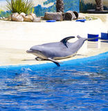 Dolphin Stock Photo
