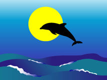 Dolphin. Jumping Dolphin with sunrise background Royalty Free Stock Photos