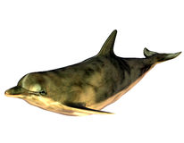 Dolphin. 3d  render a dolphin than illustration Stock Photography