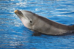 Dolphin. In front of me Royalty Free Stock Photos