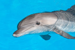 Dolphin. A merry dolphin is in the Black sea Stock Photo