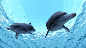Dolphin. Two dolphin are swimming in the sea Stock Photo