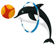 Dolphin. Illustration of two dolphin with ball and ring Royalty Free Stock Photos