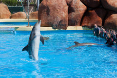 Dolphin Royalty Free Stock Photography