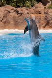 Dolphin. In Loro Park (Tenerife Stock Photos