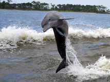 Free Dolphin Stock Images - 29838344