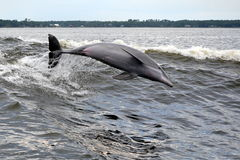 Free Dolphin Stock Images - 29838384