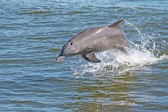 Dolphin royalty free stock images