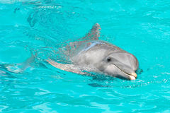 Free Dolphin Stock Images - 4978964