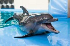 Dolphin_2 στοκ φωτογραφίες με δικαίωμα ελεύθερης χρήσης
