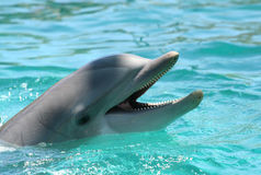 Dolphin Stock Photos