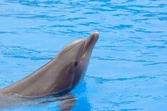 Dolphin Stock Image