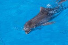 Dolphin of an afalin Stock Photos