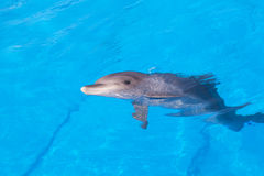 Dolphin of an afalin Stock Photography