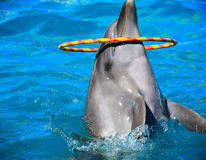 Dolphin And Circle Stock Image