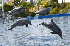 Dolphin in the aquarium stock images