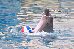 Dolphin Artist Royalty Free Stock Photography
