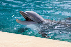 Dolphin baby Stock Photography