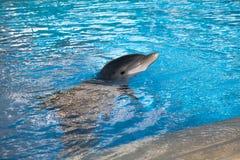 Dolphin baby Stock Image