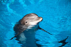 Dolphin baby Stock Images