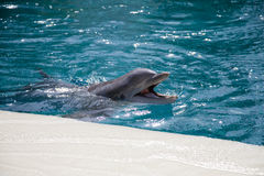 Dolphin baby Royalty Free Stock Photos