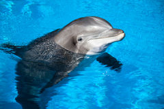 Dolphin baby Stock Image