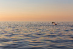 Dolphin, in the background a beautiful sunset Royalty Free Stock Image