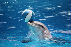 Dolphin with ball Stock Photo