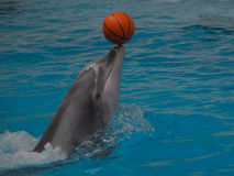 Dolphin with a ball royalty free stock photos