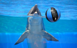 Dolphin with ball Royalty Free Stock Photos